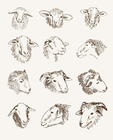 head of farm animals  set vector sketches