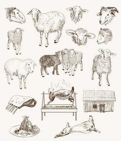 lamb chop: sheep breeding  set of vector sketches on a white background Illustration