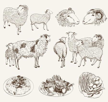 mutton: sheep breeding. set of vector sketches on a white background