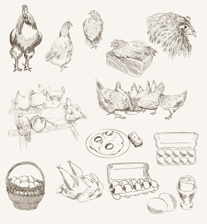 roost: chicken breeding  set of vector sketches on a gray background