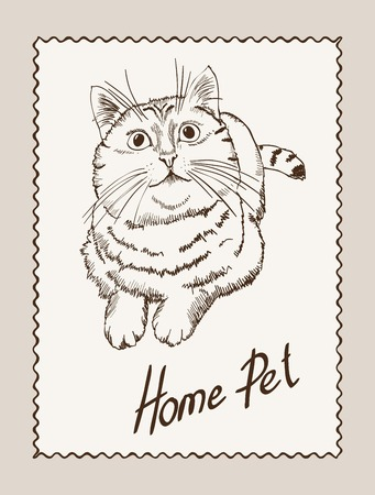 grey cat: home pet cat. vector sketch on grey