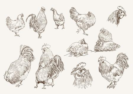 닭 사육. 벡터 디자인의 컬렉션