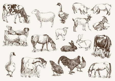 농장 동물입니다. 흰색 배경에 벡터 스케치를 설정합니다