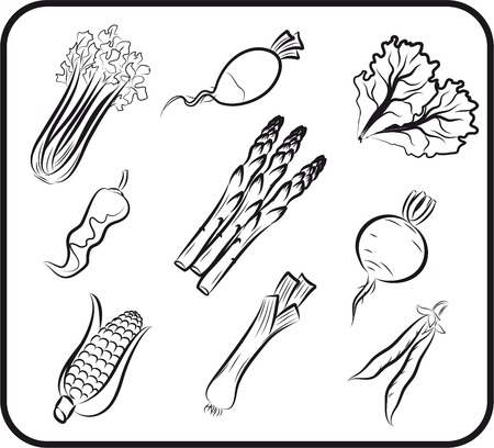 root vegetables: vegetables set sketches Illustration
