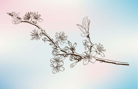 sketch codling branches made by hand