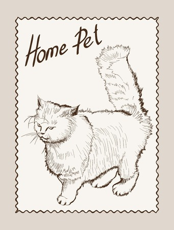 grey cat: home pet cat sketch on grey background Illustration