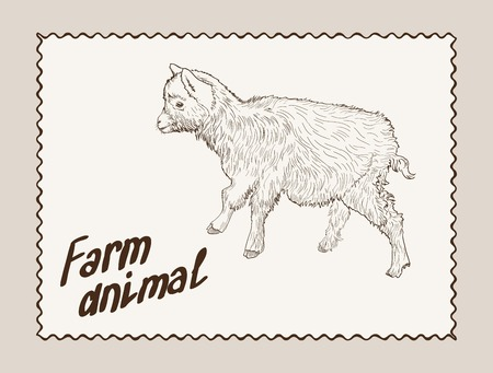 ruminant: sketch of a yearling made by hand