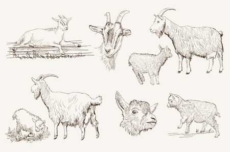 yeanling: sketch of a goat made by hand