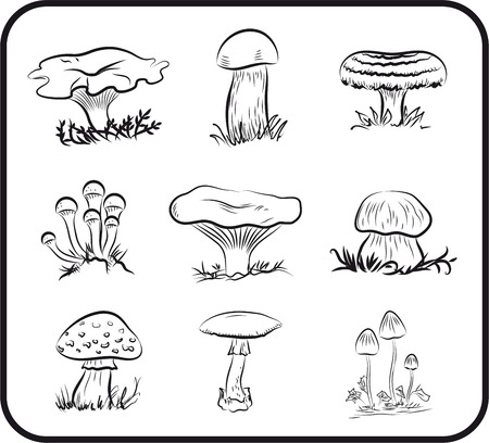 grebe: Compilation of illustrations of mushrooms collected in the forest Illustration