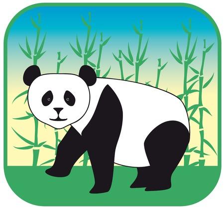 carnivora: image of a panda in the wild