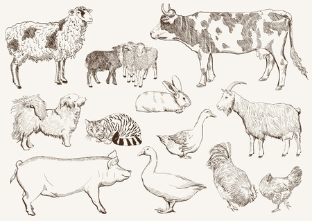 domestic cattle: farm animals set of sketches on a white background Illustration