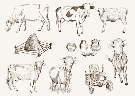 dairy cattle: cow and milk products. set of elements
