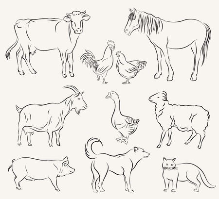 piglets: farm animals. set of vector sketches on a white background Illustration