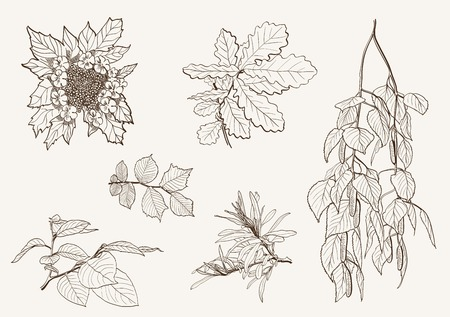 linden: tree branches. vector sketch on grey background