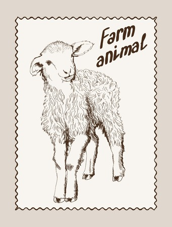mutton: sketch of a ewe, made by hand Illustration
