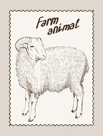ewe: sketch of a ewe, made by hand Illustration