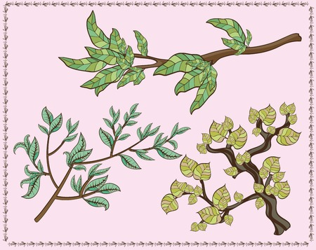 linden: tree branches sketch on grey background