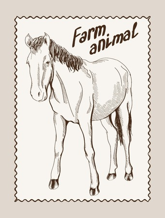 filly: sketch of a horse, made by hand Illustration