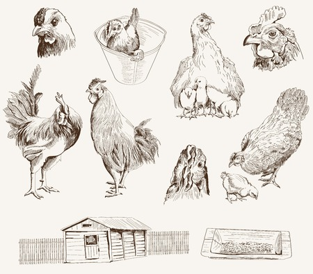 chicken breeding  collection of vector designs on a gray background  イラスト・ベクター素材