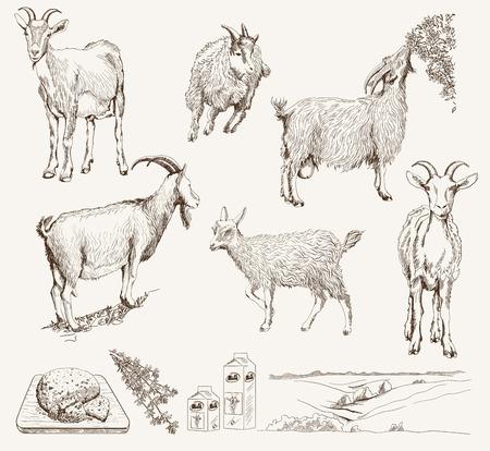 vector schets van een geit met de hand gemaakt
