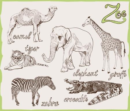animales del zoo: conjunto de dibujos vectoriales de animales que se pueden ver tanto en el zoológico y en la naturaleza Vectores