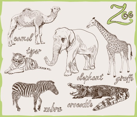 set of vector sketches of animals that can be seen both in the zoo and in the wild Vector