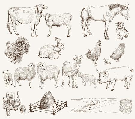 cabra: animales de granja Conjunto de dibujos vectoriales sobre un fondo blanco