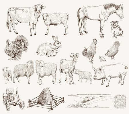domestic goat: farm animals  set of vector sketches on a white background