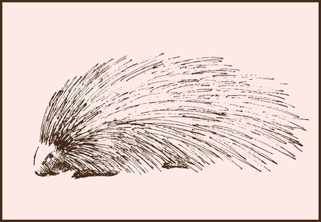 porcupine: vector sketch of a porcupine made by hand