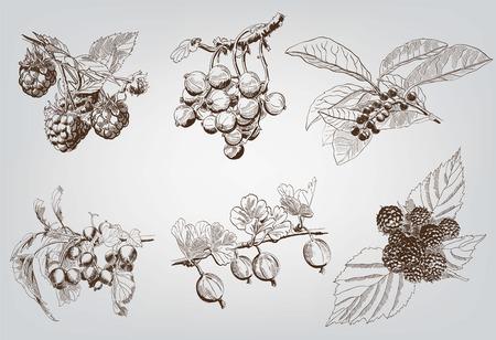 berry  set of six vector sketches handmade