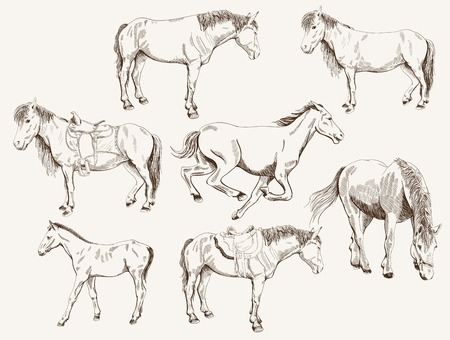 silhouettes of horses  vector set of seven sketches