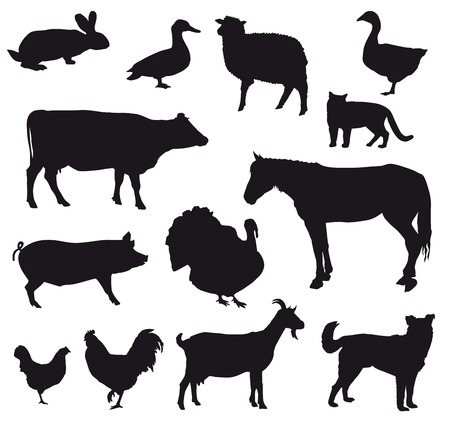 bovine: farm animals  set of vector icons on a white background