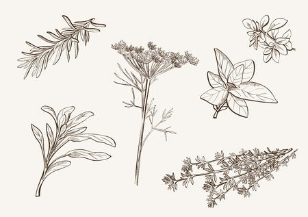 set van vector schetsen van kruiden gebruikt als specerijen