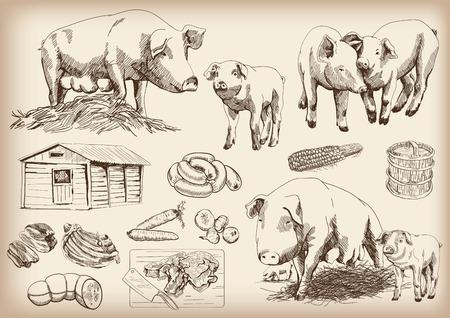 흰색 배경에 벡터 스케치 세트를 돼지 사육 일러스트