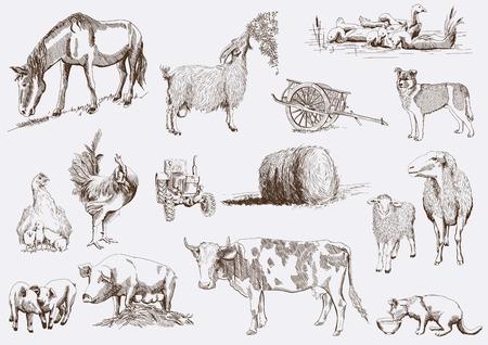 흰색 배경에 벡터 스케치를 설정 농장 동물 일러스트