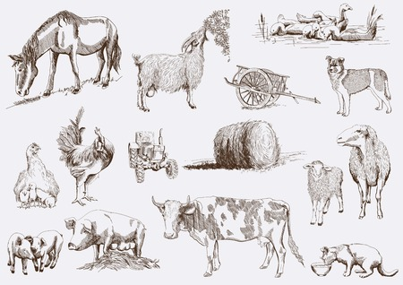 farm animals  set of vector sketches on a white background Vector