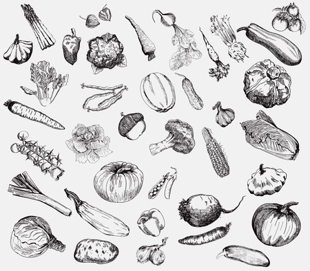 set of vector icons on the theme of vegetables