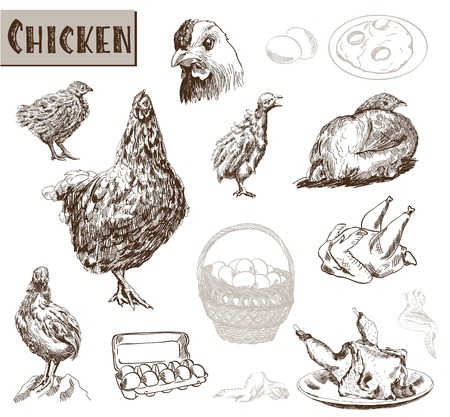 eggs in basket: chicken breeding