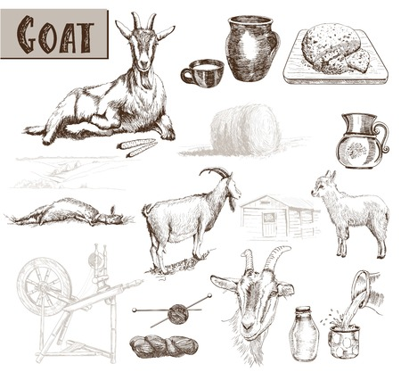 domestic goat: breeding goats. Hand drawn sketches on a gray background
