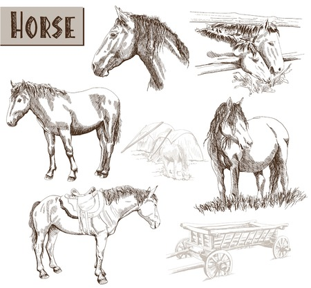 galloping: silhouettes of horses. set of vector sketches Illustration