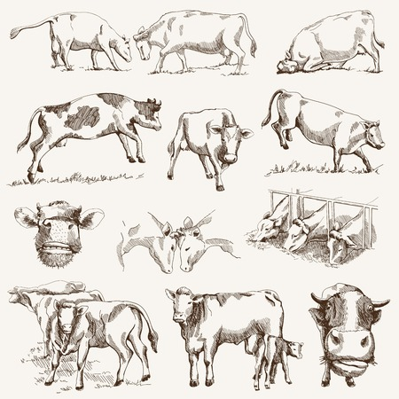 husbandry: cow. animal husbandry. set of vector elements