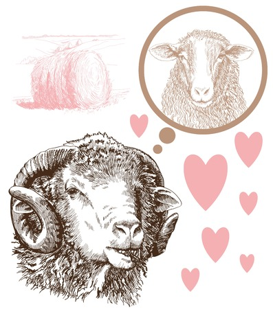 breeding: sheep breeding Illustration
