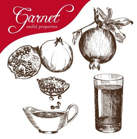 non alcohol: esbozo de una fruta de la granada, hecho a mano