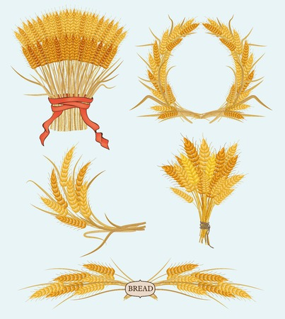 Wheat ears isolated on white background. vector Vector