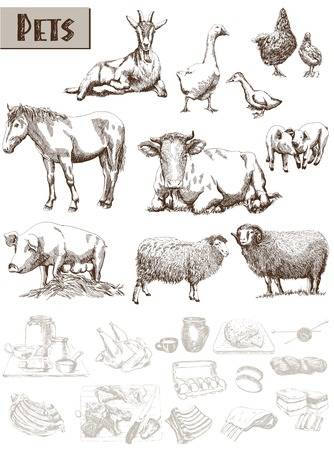 farm animals. set of vector sketches on a white background Banco de Imagens - 33153101