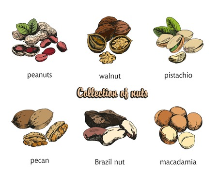 pistachios: six kinds of nuts. vector sketches. handmade