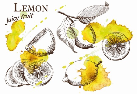 Hand drawn illustrations of beautiful yellow lemon fruits