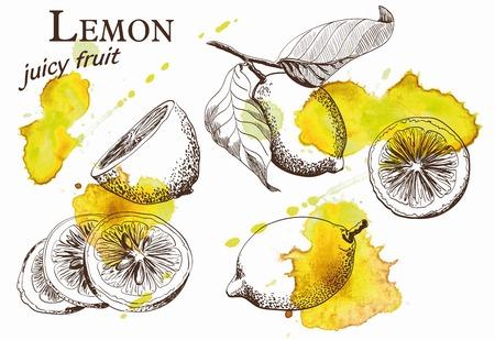 Hand drawn illustrations of beautiful yellow lemon fruits