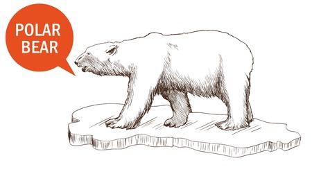 floating on water: polar bear