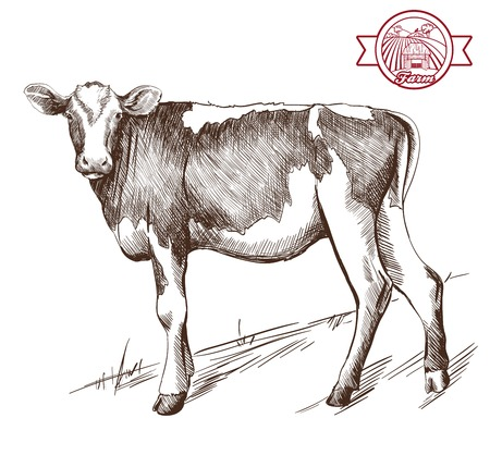 cattle: vector sketch young heifer grazing grazing cattle